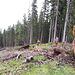 <b>Lavori forestali.</b>