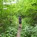 Schmaler Steig durch den üppigen Dschungel