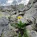 Auch auf 3000m blüht es.