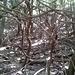 Nel bosco intricato.