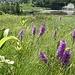 von zahlreichen Orchideen umgeben: das Stockseewli