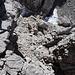 Im Aufstieg zur Steinerscharte - Rückblick auf einen Teil des Steiges.