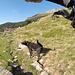 <b>Superato il Rià del Radalgasch, alle 8.25 arrivo all'Alp de Naucal (1805 m) accolto in modo poco amichevole dal cane pastore: continui ringhi e sguardi minacciosi.</b>