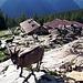 <b>Alp de Naucal (1805 m).<br />L'alpeggio, di proprietà del Comune di Castaneda, comprende cinque caseggiati di cui quattro affiancati, ristrutturati nel 1995, con i tetti ricoperti di lamiera rossa ondulata.</b>