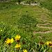 Blumen und der gewundene Weg über Wärben
