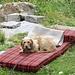 Alpe di Mem ... Chiara la simpatica cagnetta dell'alpe .. che vita da cani !