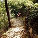 Ein paar Meter weiter unten stößt man nun auf einen Hangquerweg, dem wir nach Süden folgten, bis zur Örtels-Hütte....