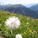 Die Wiese am Schlierekopf bietet echte Artenvielfalt
