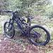 <b>Lascio la bici e continuo a piedi nella fitta abetaia.</b>