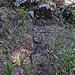 Am Gipfel des Schefferbergs...eine kleine, aber kurze Überraschung.