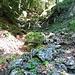 Abstieg durch den Eckleitengraben. Noch ists harmlos...