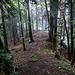 Weiter ging es auf der Köppelschneid, immer exakt auf der Landesgrenze entlang, durch einen schönen Buchenwald ...