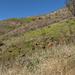"""Un  grosso incendio circa nel 2006 ha distrutto la vegetazione: unico che continua a vivere il <a href=""""http://commons.wikimedia.org/wiki/Pinus_canariensis"""" rel=""""nofollow""""> Pinus Canariensis</a>, una varietà di pino adattatosi al calore delle eruzioni per cui ha una corteccia durissima che non viene distrutta dal fuoco"""