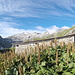 """<b>Dopo meno di un quarto d'ora pervengo alla Cascina della Gana (2232 m), la Ghièna (ganda) come si legge sulla tavoletta di legno affissa alla baita. <br />Per avvicinarmi all'ingresso devo farmi strada tra i """"lavazz"""", i romici (Rumex alpinus) che in prossimità del rifugio formano una giungla alta un metro. </b>"""