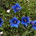 Dieses Blau bringt weder ein Chemiker zustande, noch kann es auf einer Fotografie 1:1 wiedergegeben werden...