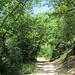 Collie Eugane - steiler Hohlweg bergauf
