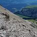 Seitenblick in den schuttigen Abstieg zum P.2446. Auch im Abstieg bin ich wiederum über den Tschep Sura gestiegen.