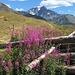 noch einmal ein Blick zurück Richtung Mont Vélan