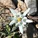... und begegnen entsprechend schönen Blumen