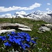 intensives Blau vor dem höchsten Schweizer Gipfel