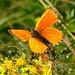 Ein knalloranger Schmetterling sorgt für einen Farbtupfer.