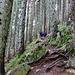 Der lange, steile Aufstieg durch den Wald beginnt .....