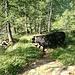 Io che mi nascondo dalla mucca-toro dagli atteggiamenti molto aggressivi :D