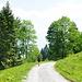 Schotterweg vom Flüewald bis zur Bergstation Morgenholz (983 m).