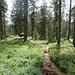 wünderschöne Moorlandschaft mit unzähligen Heidelbeerpflanzen kurz unterhalb des Ällgäuli