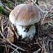 Pilze gibt's reichlich