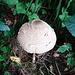 Pilze sprießen überall aus dem Boden
