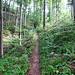 immer schön aufwärts durch den lichten Wald