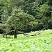 der Baum hat sich einiger überflüssiger Äste entledigt