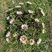 Blumenkranz aus Diesteln