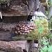 nettes Pilzarrangement an alten Holzscheiten