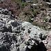 Oberhalb der kurzen Kletterstelle