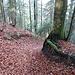 steiler und leicht rutschiger, laubbedeckter, Abstieg in den Churzeneigrabe