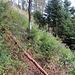Zum Hüttenwasen hoch über den alten Pfad, der nicht immer so gut sichtbar war