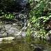 Wasser im Wald