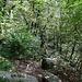 Undurchdringlicher Wald