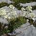 hübsche Blumen auf dem Abstieg 4