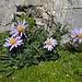 hübsche Blumen auf dem Abstieg 1