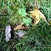 Blätter im Gras