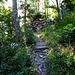 Wanderweg, ab in den Wald
