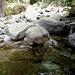 Schon fast im Tal ergibt sich bei diesem Bachlauf noch eine Bademöglichkeit in einer der zahlreichen Gumpen