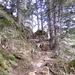 Den Waldweg hinauf nach Alplen.
