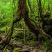 Der Weg führt unter einem abgestorbenen Baumstumpf hindurch. Auch dieses Bild entstand bei meinem ersten Besuch im 2007.