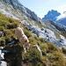 Bonny war auch am Berg unterwegs