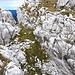 Die Kletterstellen, die ich im Aufstieg zu bewältigen hatte, überstiegen den Iten Schwierigkeitsgrad nicht.