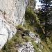 ...bis zu einem großen Baum. Hier tut sich links eine Schwachstelle in der Felswand auf...